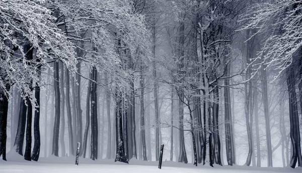 Ron Wilkins Sent to Siberia